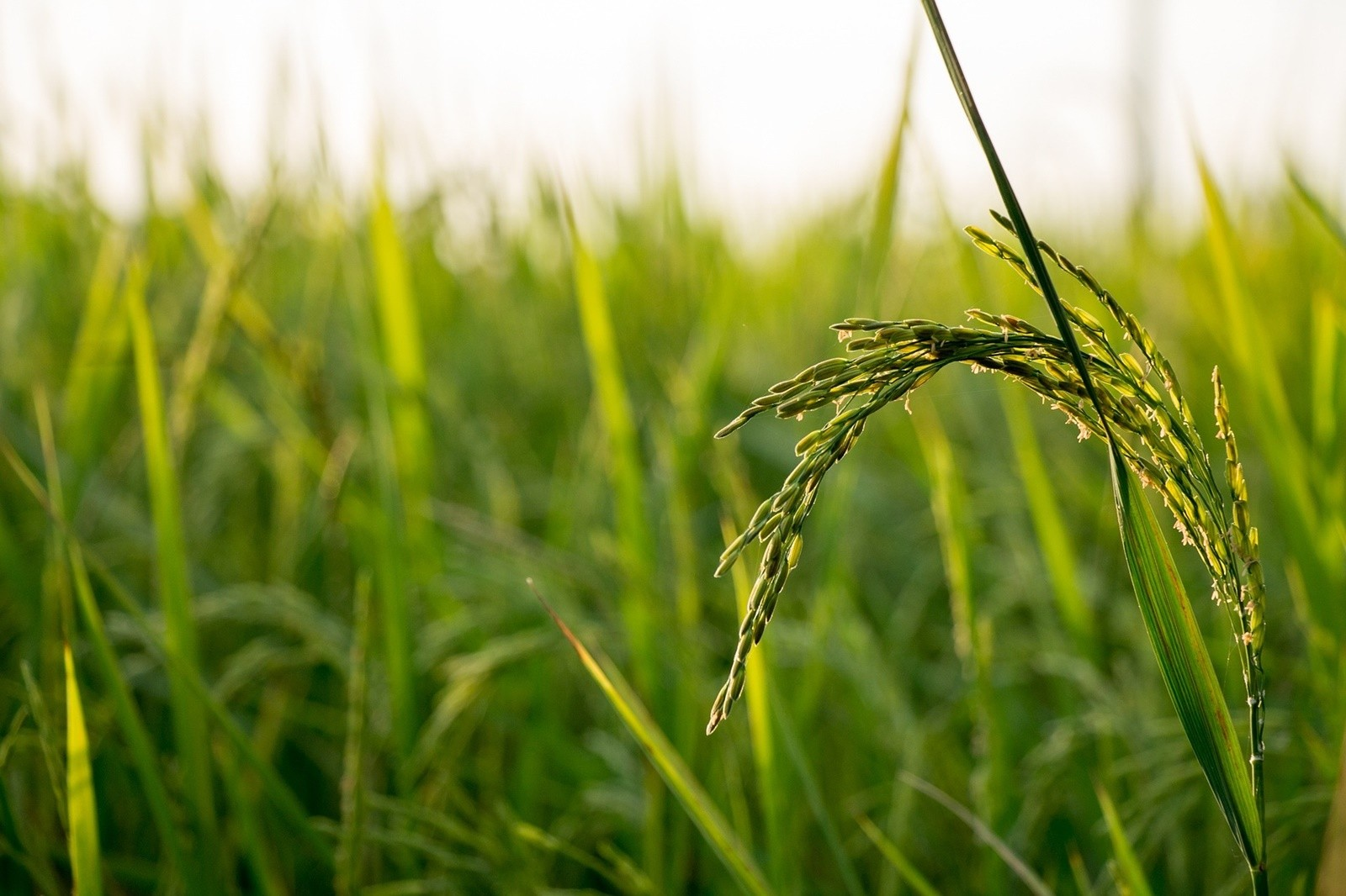 เกษตรอินทรีย์