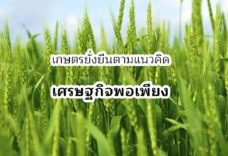 เกษตรยั่งยืนตามแนวเศรฐกิจพอเพียง